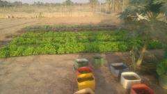 plantation_potager_2