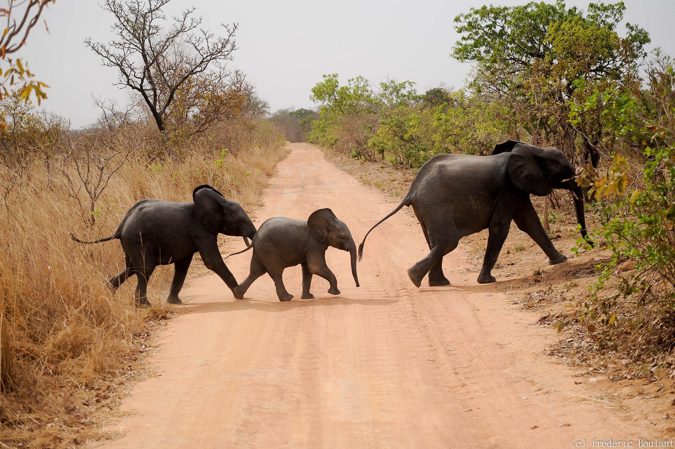 Un éléphant et des petits