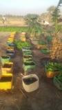 plantation_potager_3