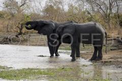rencontre-animale-couple